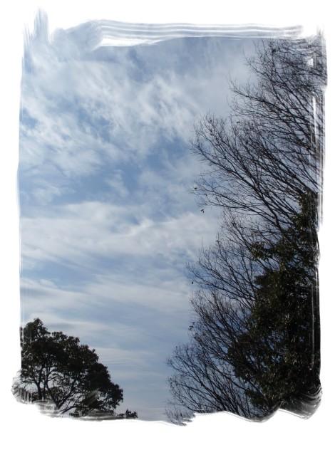青空日和_c0026824_15392469.jpg