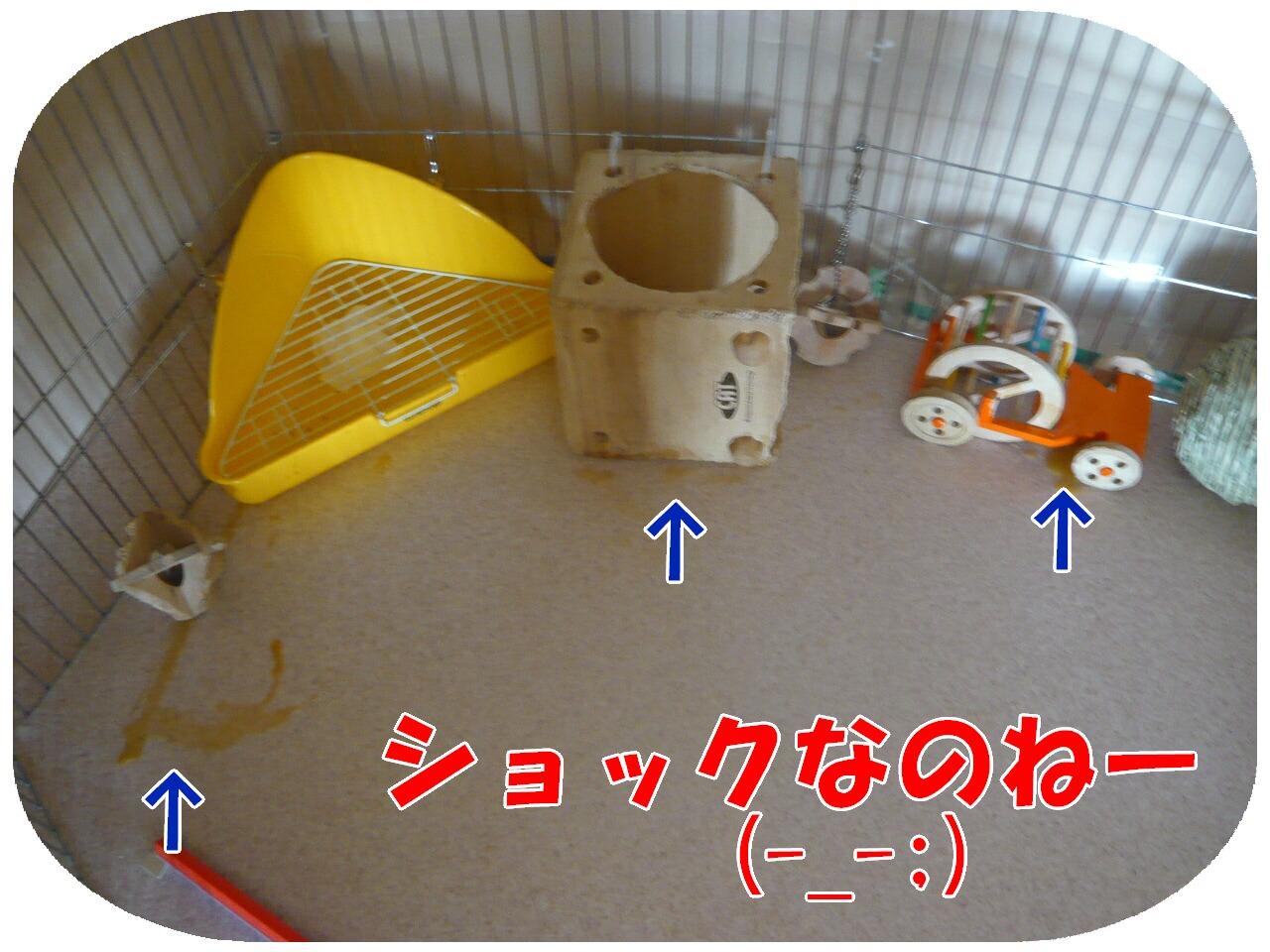 c0151439_14123479.jpg