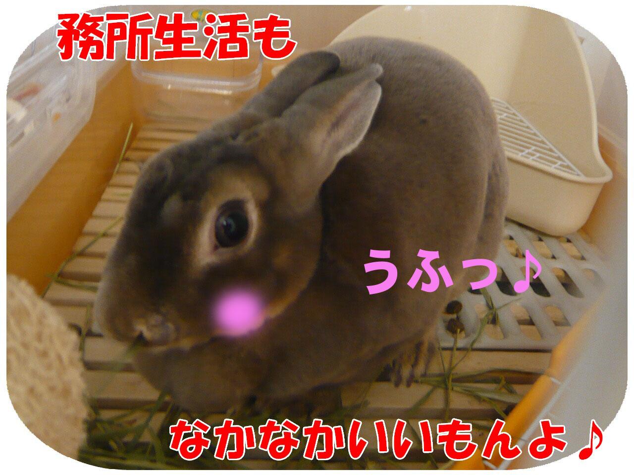 c0151439_1425532.jpg
