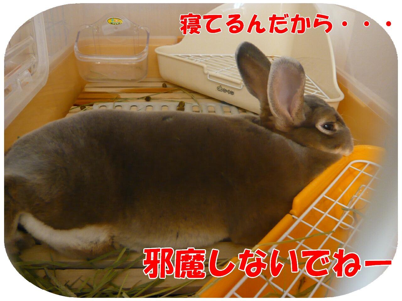 c0151439_14302789.jpg