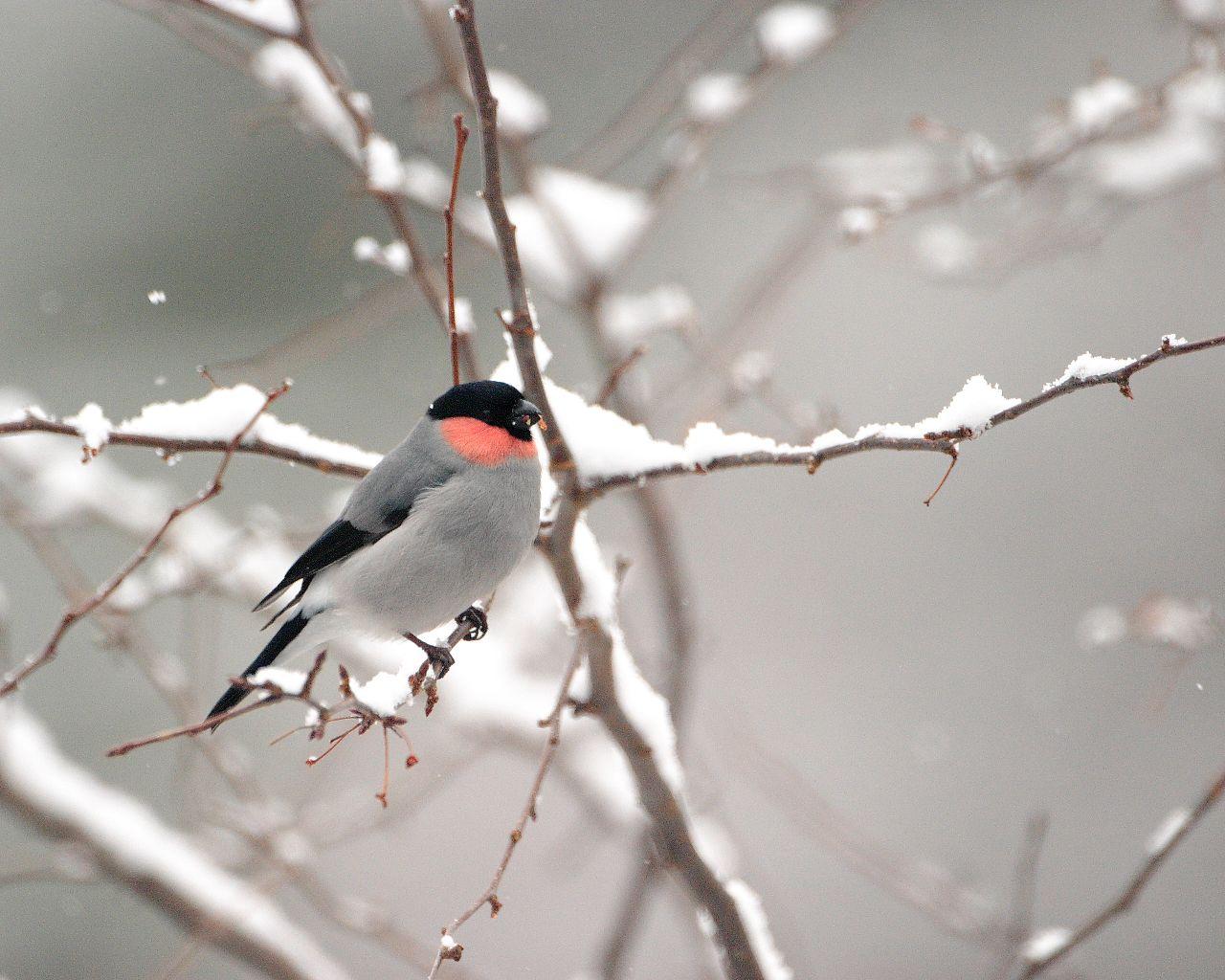 明日は雪。明後日が楽しみ。_f0105570_22351189.jpg
