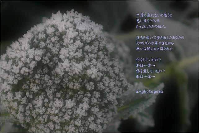 b0154475_23113495.jpg