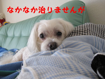 f0145192_1674429.jpg