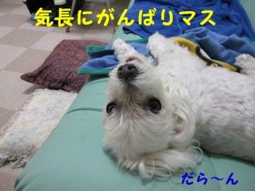 f0145192_1682672.jpg