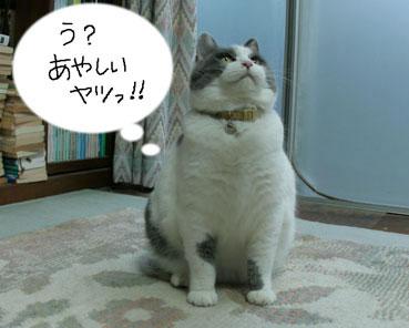デブ猫ちいこのひとりずもう_d0071596_2003633.jpg