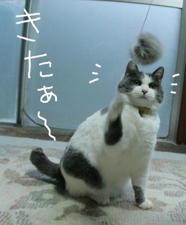デブ猫ちいこのひとりずもう_d0071596_2011687.jpg