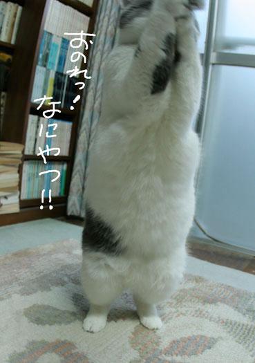 デブ猫ちいこのひとりずもう_d0071596_2013348.jpg