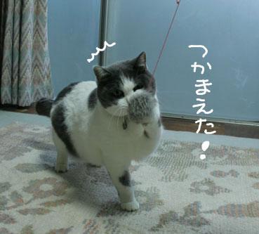 デブ猫ちいこのひとりずもう_d0071596_2014840.jpg