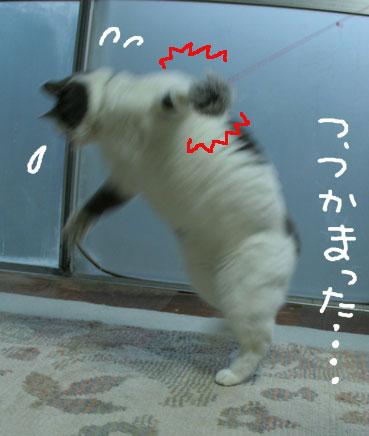 デブ猫ちいこのひとりずもう_d0071596_2023537.jpg