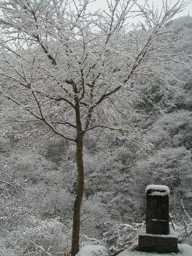 初雪と、買いもの。_b0157216_1814281.jpg