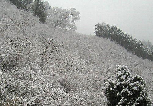 初雪と、買いもの。_b0157216_1816483.jpg