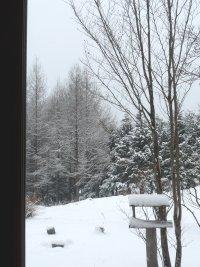 サラサラの粉雪です。_f0019247_1228595.jpg