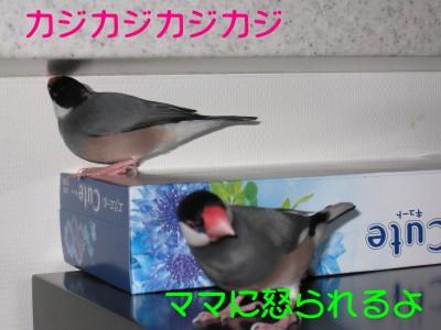 b0158061_20252439.jpg