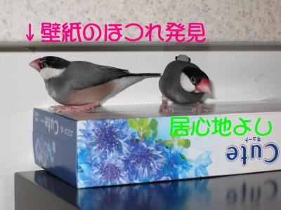 b0158061_2025531.jpg