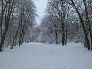 ひとまずこの厳冬も終わりらしいです。_c0180686_17252033.jpg