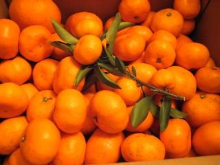 冬の食べ物_a0091095_1723370.jpg