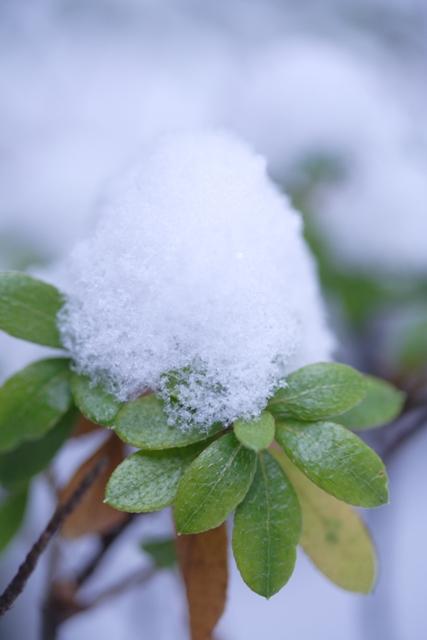 雪の帽子_f0091207_0373290.jpg