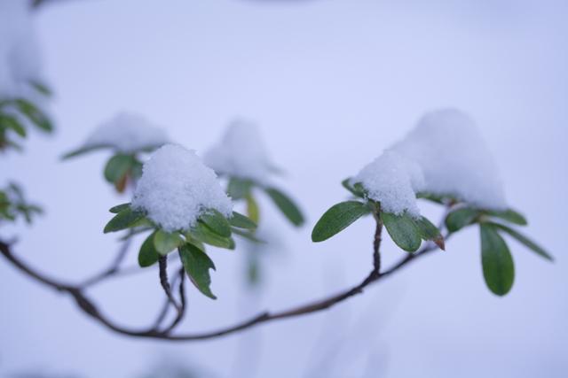 雪の帽子_f0091207_037694.jpg