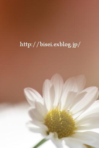 b0132016_20371760.jpg