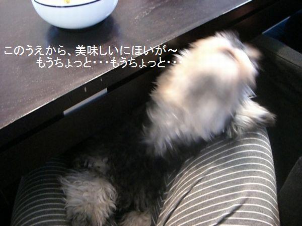 f0197317_1634680.jpg