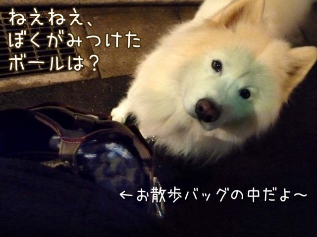 初物_c0062832_1704675.jpg