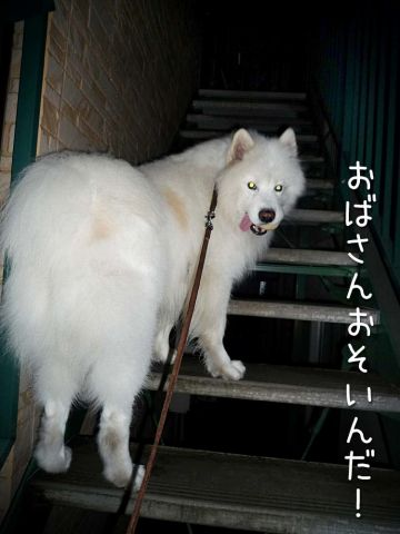 初物_c0062832_1705295.jpg