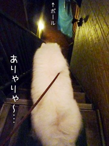 初物_c0062832_1705763.jpg