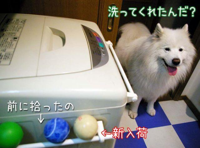 初物_c0062832_171287.jpg