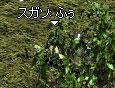 b0128058_10413137.jpg