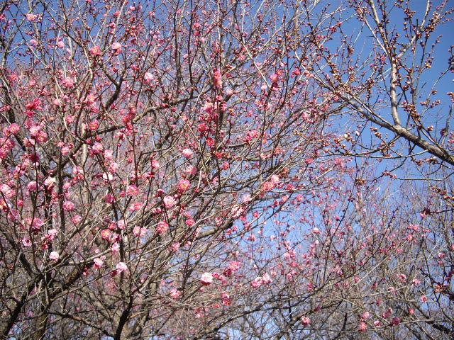 春遠からじ・・・・_d0116059_22285514.jpg