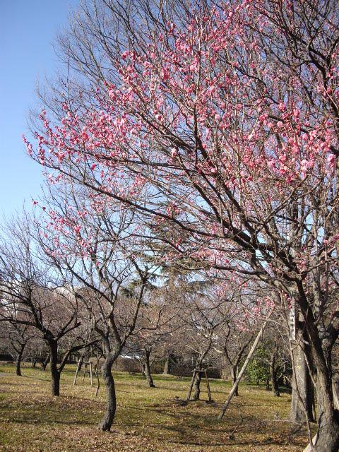 春遠からじ・・・・_d0116059_22314576.jpg