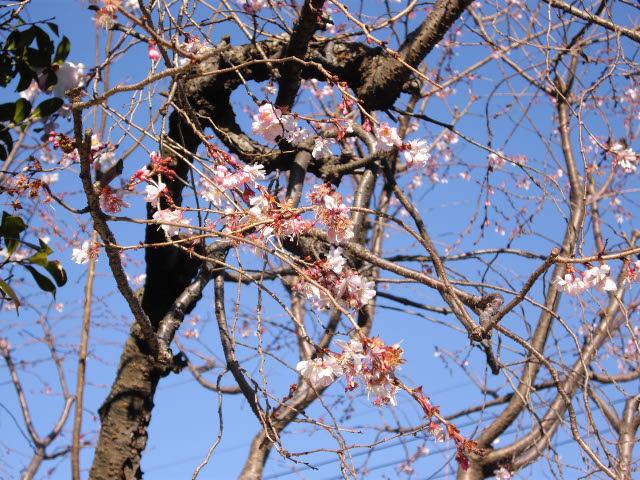 春遠からじ・・・・_d0116059_22363584.jpg