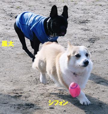 d0152869_2005479.jpg