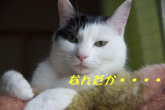 f0197682_2039540.jpg