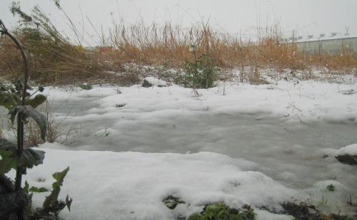 大雪警報出ました_f0157387_13233447.jpg