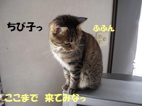 c0139488_17331983.jpg