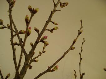 春よ来い_d0104091_18412277.jpg