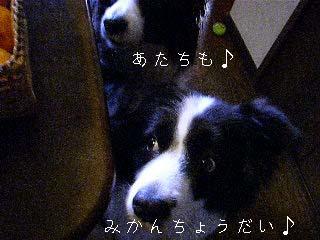 f0114893_11374542.jpg