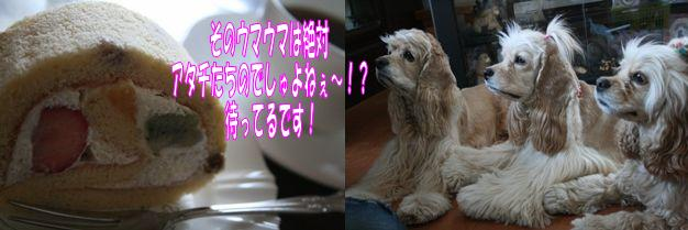 c0128303_15125152.jpg