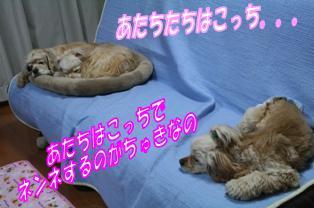 c0128303_1514716.jpg