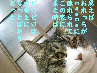 b0151748_13454889.jpg