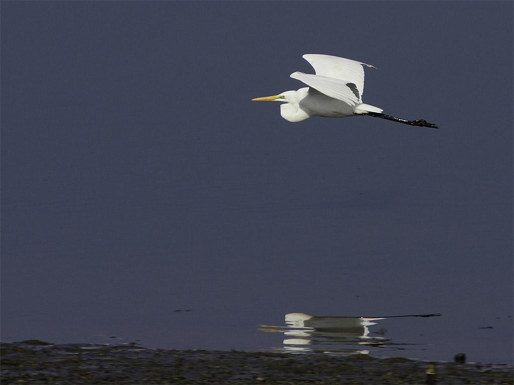 飛行力学,,,,,,,,,,,,,(大東市 深北緑地 冬の鳥たち)_f0186356_20384065.jpg