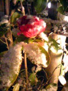 雪の日_f0023482_1948325.jpg