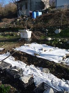 1月の畑~冬の凍結と鳥対策_f0106597_22113959.jpg