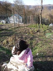 1月の畑~冬の凍結と鳥対策_f0106597_2291576.jpg