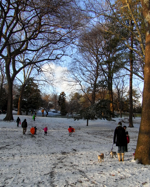 雪のセントラルパーク名物 ソリ_b0007805_15272512.jpg