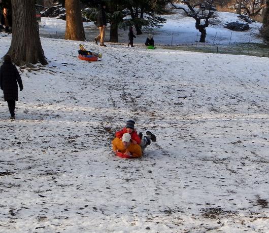 雪のセントラルパーク名物 ソリ_b0007805_2244725.jpg
