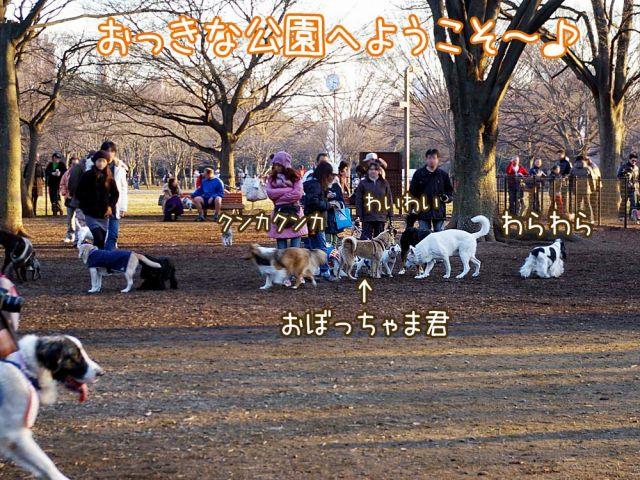 おっきな公園なのだ~_c0062832_16335074.jpg