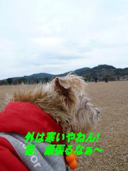 d0013645_1675058.jpg