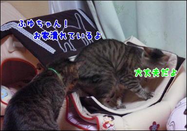 d0139352_04320100.jpg